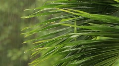 Tropical rain drops falling on the large palm leaves Stock Footage