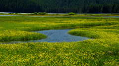 View of yellow flowers in Sparks Lake Stock Footage
