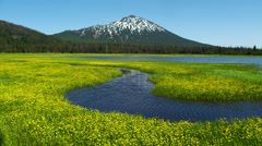 View of Mount Bachelor and yellow flowers in Sparks Lake Stock Footage