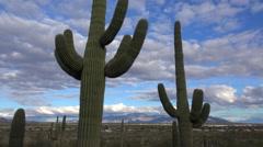 4K Saguaro Cactus Overlook Tucson, Arizona Time Lapse Stock Footage