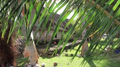 Men's House on Micronesian Island of Yap Stock Footage
