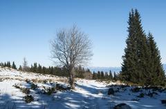 Winter scene with tree on snow Stock Photos