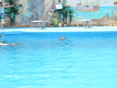 Performance of dolphins. Related clips are in my portfolio in 1920x1080. Stock Footage
