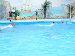 Dolphinarium and dolphins. Related clips are in my portfolio in 1920x1080. Stock Footage