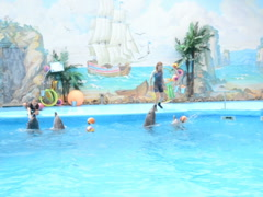 Shooting in a dolphinarium. Related clips are in my portfolio in 1920x1080. Stock Footage