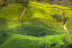landscape view of tea plantation in cameron highland - stock photo