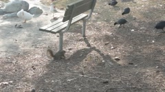 Ducks and Squirrel Stock Footage
