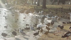 Lake Cove in a Park with Ducks Stock Footage