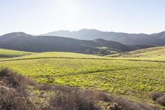 back lit california meadow - stock photo