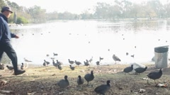Long Shot of a Lake Cove with Ducks Stock Footage