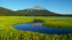 View of Mount Bachelor and yellow flowers in Sparks Lake - stock footage