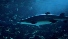 Incredible shot of a passing shark. 4K footage. - stock footage