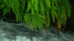 Close-up of rapids and green plants at Columbia river gorge - stock footage