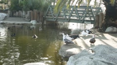Beautiful Lake View with Ducks 1 Stock Footage