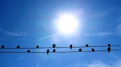 Birds Sitting On Electric Wires Stock Footage