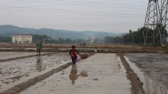 Farmers working in the rice fields Stock Footage