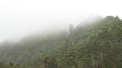 Forest in Hawaii Stock Footage