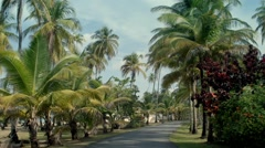 Driving caribbean palm trees lush 02 - stock footage