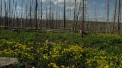 Flowers in meadow at Glacier National Park Stock Footage