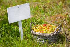 gooseberry in basket and signboard on grass - stock photo