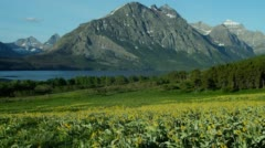 View of sunflower field and mountains in Saint Mary Lake Stock Footage