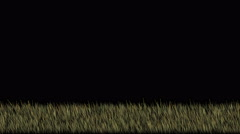 4k Fireflies in grass lawn pasture,green grassland in wind,nature background. Stock Footage