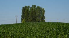 View of green corn field in Palouse Stock Footage