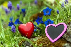 two hearts between gentian and grape hyacinth meadow - stock photo