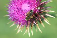 bee on flower spring season - stock photo