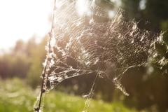 spider web in autumnal sunrise - stock photo