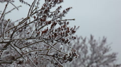 Frostbite tree branch in winter Stock Footage