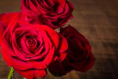 three red roses light fading - stock photo