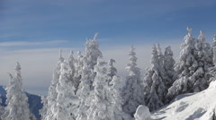 Beautiful winter landscape in a sunny day with blue sky and low temperature. Stock Footage