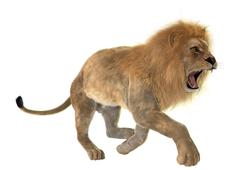 Angry lion Piirros