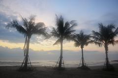 Coconut Palm tree on Hat Chao Samran beach - stock photo