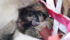 Cute kitty cat newborn and mother cleaning (handheld shot) Stock Footage