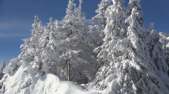 HD. Group of trees on a mountain peak, covered by snow. Winter season. Vacation. Stock Footage