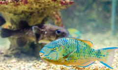 Fish that live in the red sea Stock Photos