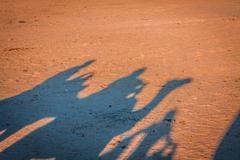tunisia. somewhere on sahara desert near douz... - stock photo