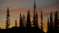 View of pine trees at sunrise in Mount Rainier National Park Stock Footage