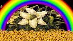 Nature, Rainbow Flowers - stock footage