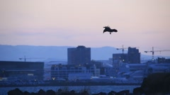 Ravens gliding on the wind with downtown Reykjavik, Iceland in the background Stock Footage