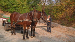 Wide Shot of man and two horse wagon at Gorodetske in Zhytomyr province, Ukraine - stock footage