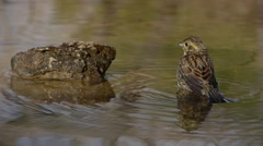 Small Bird In Water Stock Footage