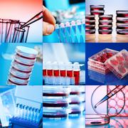 Collage of clinicians studying microbiology genetics in laboratory Stock Photos