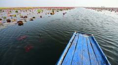 The sea of pink lotus, Thailand Stock Footage