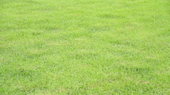 Green grass production Stock Footage