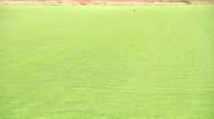 Growing Grass Stock Footage