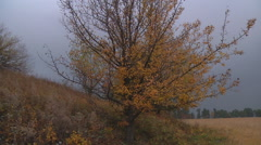 Wide Shot of hill and trees at Gorodetske in Zhytomyr province, Ukraine Stock Footage