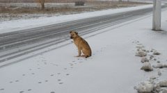 Dog sitting by the side of the road in the snow Stock Footage